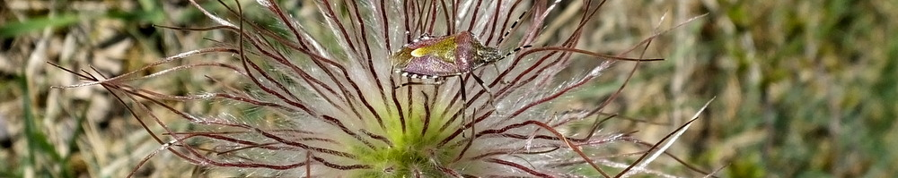 Nature-guide information on bug finding.