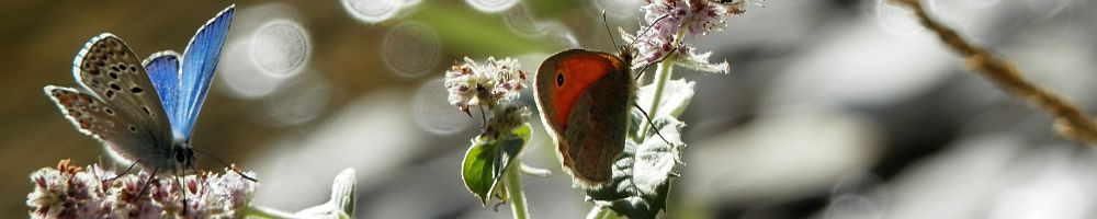 Nature-guide information on butterfly finding.